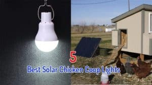 Best Solar Chicken Coop Light