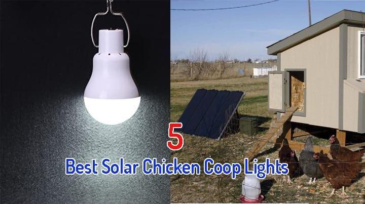 Best Solar Chicken Coop Light